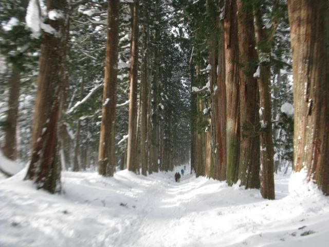 戸隠神社奥社 杉並木